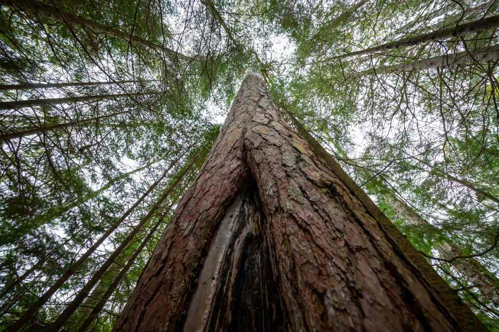 This image has an empty alt attribute; its file name is compressed_maes_20190524_cloquet-forestry-center_29-min.jpg